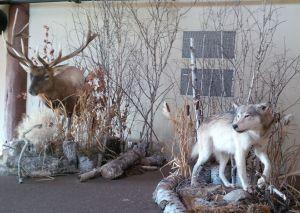 Elk Ridge Animal Terrace
